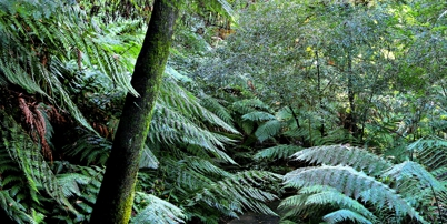 Rainforest walk thumb2