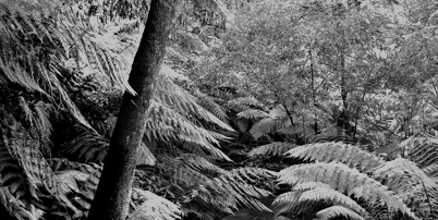 Rainforest walk thumb bw2